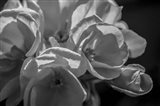 Monochrome Flower 05