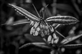 Monochrome Flower 55