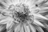 Monochrome Flower 78
