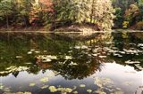 Autumn Lakeside View Of Forest