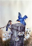 Bluebirds With Daisies 3