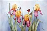 Irises Four