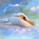 Beautiful Swan 2A