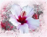 Flower Design 6MN