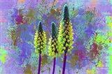 Flower Design H52
