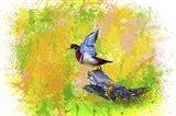 Bird Collection 3