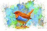 Bird Collection 4