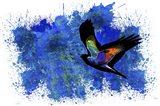 Bird Collection 9