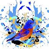 Bird Collection 13