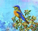 Bird Collection 15