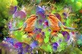 Lover Birds M2