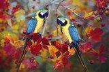 Bird Collection 19