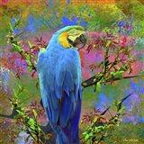 Bird Collection 24
