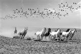 Wild Horses 2M
