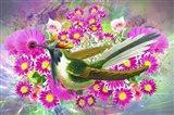 Bird Collection 40