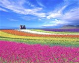 Colorful Landscape