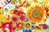 Garden Of Flowers M5