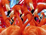 Red Flamingo Family