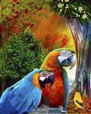 Parrot Love 3