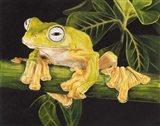 Musky Flying Frog