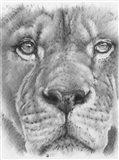 Up Close Lion