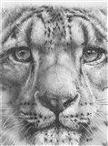 Up Close Snow Leopard
