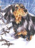 Dachsund In Snow