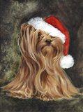 Noel - Yorkshire Terrier