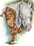 Andalusian - Spanish Mustang