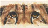Eye- Catching Cheetah