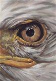 Eye-Catching Bald Eagle