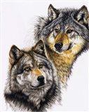 Splendid Companions