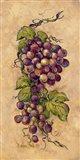 Vintage Grapevine II