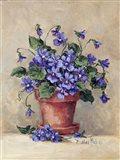 Viola Pot