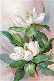 Classic Magnolia A