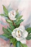 Classic Magnolia B