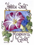 Heaven Sent Mornning Glory-Seed Packet