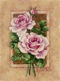 Rose Fresco