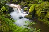 Mossy Green Rocks