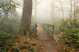 Alum Trail