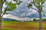 dillow corn field