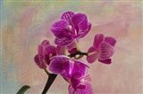Carols' Orchids II