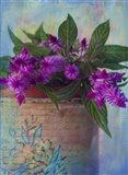 Brushy Purple