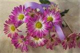 Purple Daisy Mums