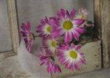 Purple Daisy Mums 2