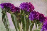Purple Status