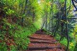 Appalachian Trail 3