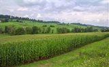 Boone's Cornfield