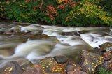 Fall Leaves On Rocks