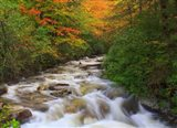 Fall Rapids3
